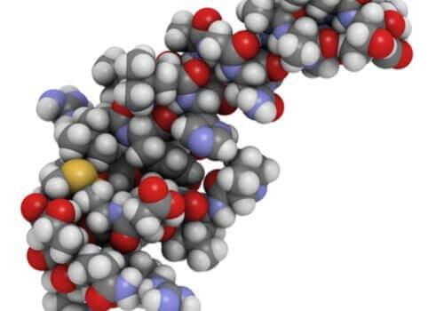Orexinets påverkan på sömnen och matvanorna