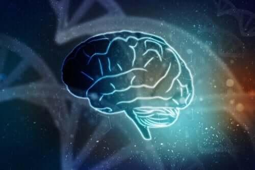 Ritning av hjärna.