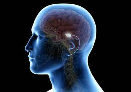 Mörk materia i hjärnan - att röra på sig och lära sig
