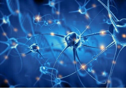Det är viktigt att stärka de neurala kopplingarna under barndomen