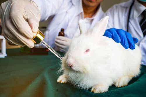 Djurförsök på kanin