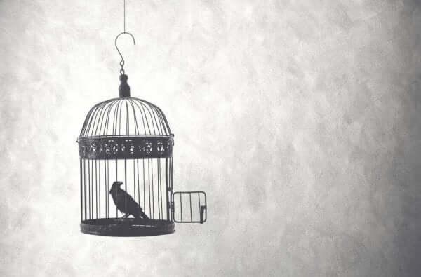 Fågel i bur
