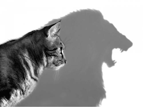 Vad Rathus självhävdelsetest kan lära oss