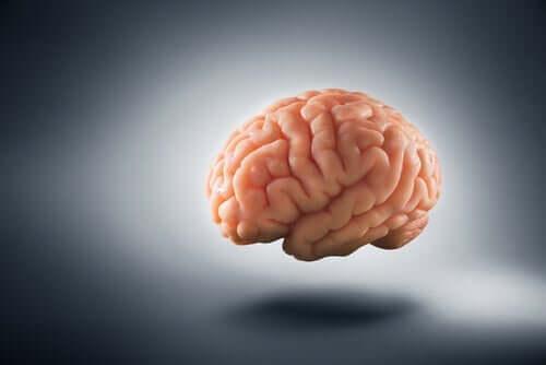 Hur fattigdom förändrar den mänskliga hjärnan