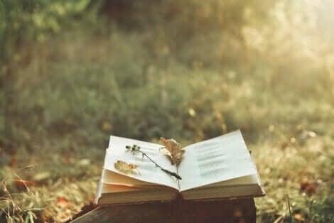 En öppen bok på ett soligt fält