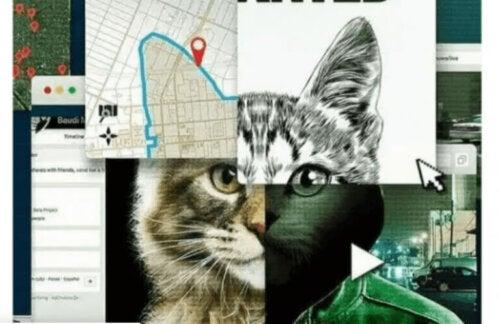 Tassarna bort från katterna: Nätjakten på en mördare