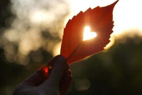 Ett löv med ett hjärtformat hål