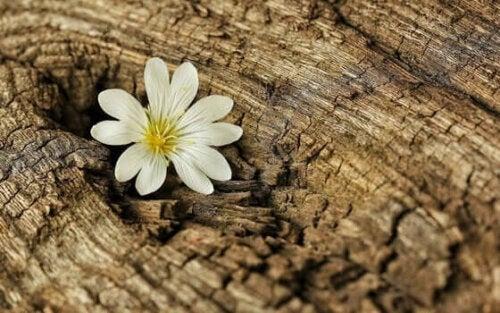 En blomma i en stubbe, ett tecken på elasticitet under coronaviruskrisen.