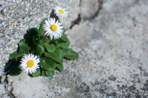 Blommor som representerar hopp i kriser