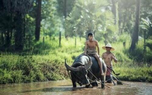 Män och en vattenbuffel