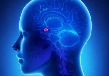 Amygdala och ångest: Vad är kopplingen?