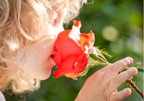 Ett barn som luktar på en ros