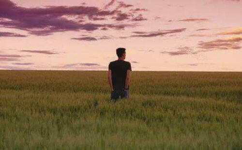 En man på ett fält ser mot solnedgången