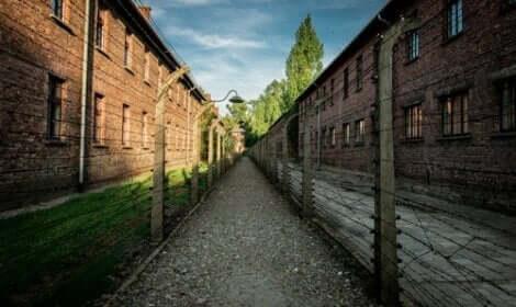 En stig mellan taggtrådsstängsel i koncentrationsläger