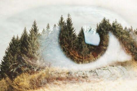 Ett öga täckt av ett tallandskap