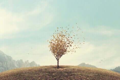 Ett träd på en kulle