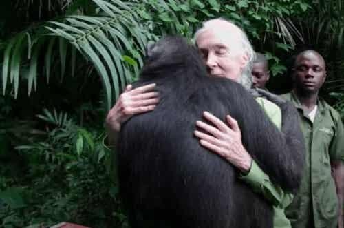 Hur Jane Goodall blev en världskänd expert och aktivist