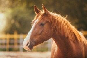 Hippofobi, den irrationella rädslan för hästar