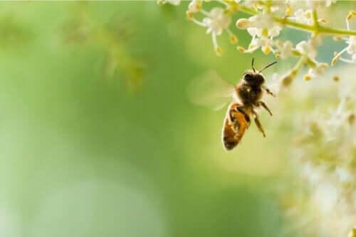 Ett flygande bi