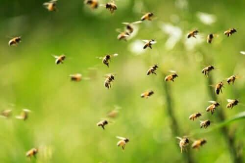 Många bin som flyger