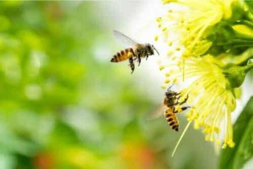 Symtom för apifobi, en extrem rädsla för bin