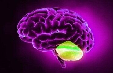 Lillhjärnan och divergent tänkande