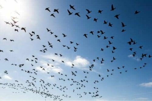 Tre sätt att övervinna rädslan för fåglar