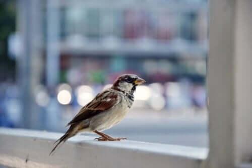 En liten fågel på ett räcke i storstadsmiljö