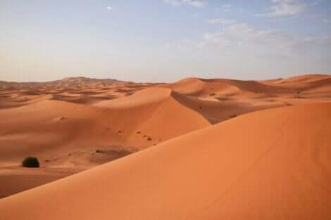En bild av Saharaöknen