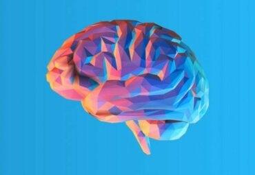 Varför har hjärnan veck och vad är nyttan med det?