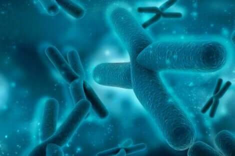 Specifika kromosomer