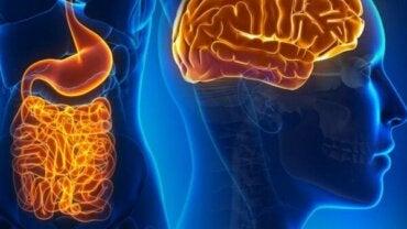 Mag-tarmkanalens nervceller och deras fascinerande värld