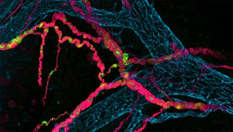 Kommunikationen i vårt nervnätverk är oerhört snabb