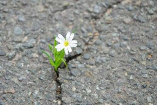 En blomma som växer genom en spricka i asfalten