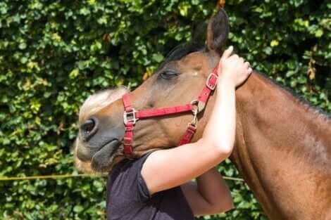 Hästunderstödd terapi kan fylla många människors emotionella behov