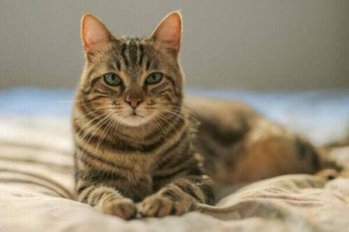 En katt på en säng