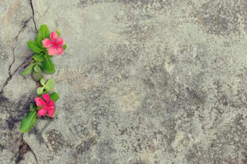 Blommor växer i en spricka i betongen