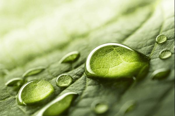 Naturalistisk intelligens hjälper oss att se samband i naturen