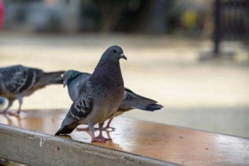 Ornitofobi eller rädsla för fåglar