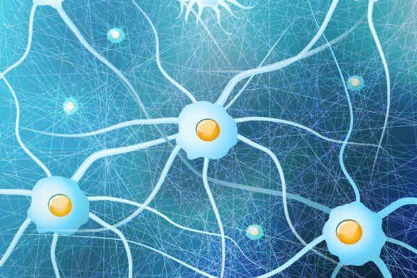 Det finns en rad olika gliaceller som fyller olika funktioner