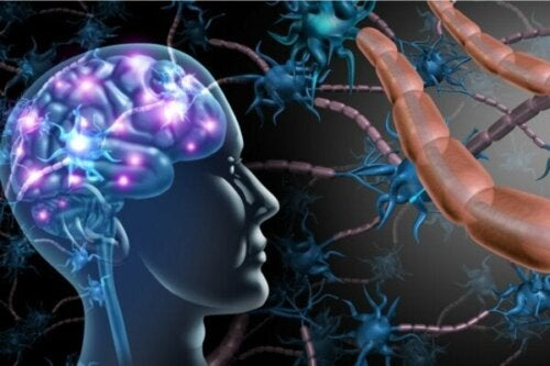 Skillnaderna mellan multipel skleros och ALS