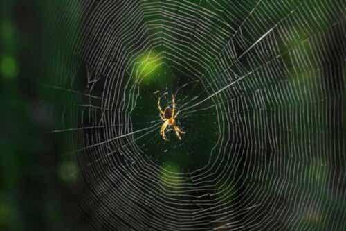 Vad betyder det när du drömmer om spindlar?